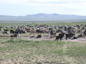 カラコルム地方には草原地帯が広がっています。