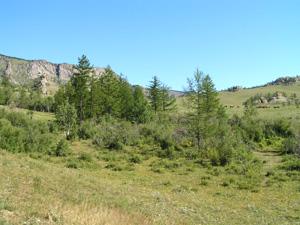 森林や河など豊かな自然があるテレルジ国立公園。